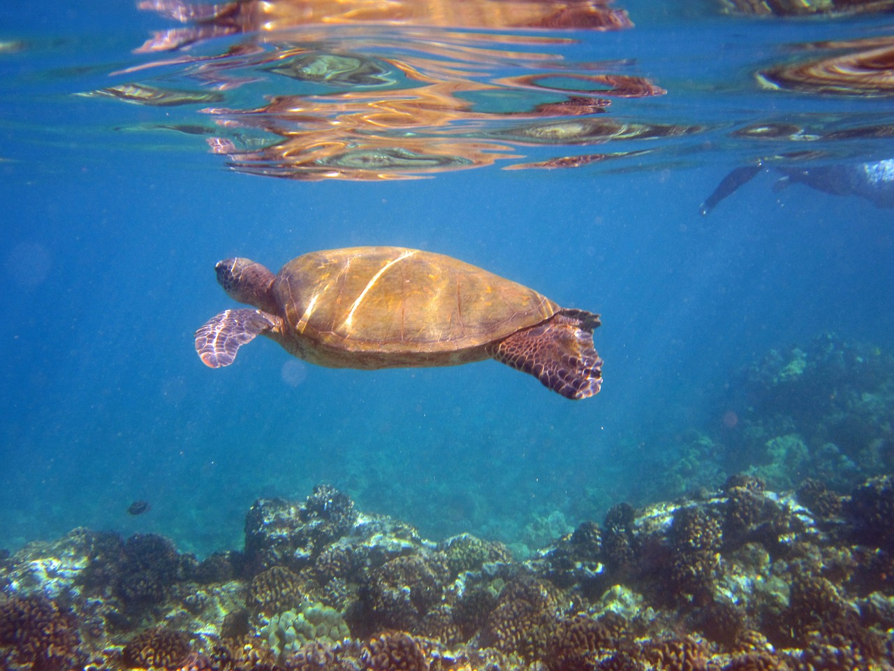 Travel to Maui, Hawaii-Blackwell Travel